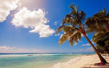 sea, beach, tropics
