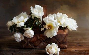 цветы, розы, лепестки, корзинка, композиция, белые розы