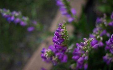 цветы, размытость, сиреневые цветы, julie jablonski