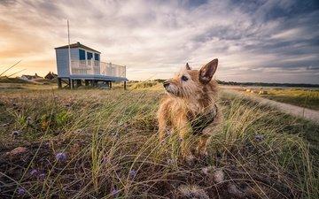 небо, трава, пейзаж, взгляд, собака, животное, друг, emily endean