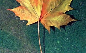 природа, фон, осень, разное, кленовый лист, золотой