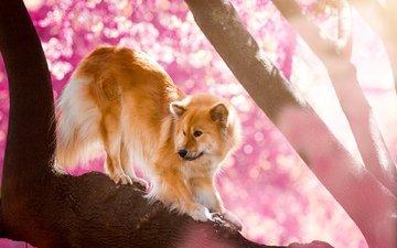 nature, tree, dog, the eurasier