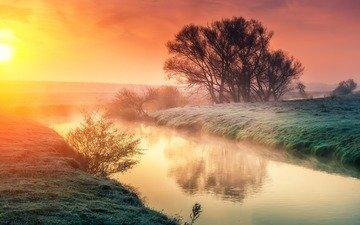 trees, river, the sun, nature, landscape, morning, dawn