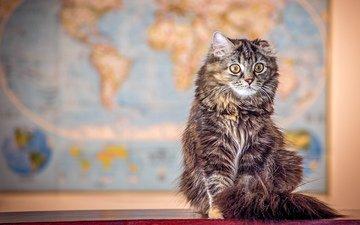кот, мордочка, усы, кошка, взгляд, merma1d
