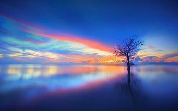 lake, tree, sunset, reflection, landscape, chaiyun