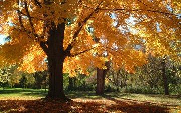 деревья, листья, парк, ветки, осень