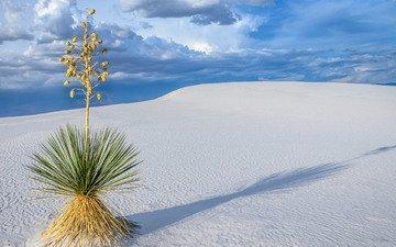 пейзаж, песок, пустыня, растение, дюны, sanjay_bhat, пустныня