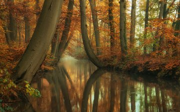 trees, river, nature, forest, reflection, trunks, autumn