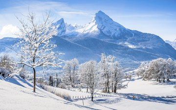 trees, mountains, snow, nature, winter, alps, bayern