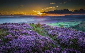 flowers, nature, sunset, landscape, fog, field