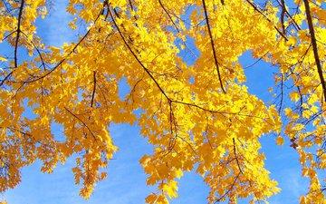 небо, дерево, листья, макро, ветки, осень