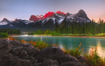 цветы, деревья, озеро, горы, природа, лес, пейзаж, канада, альберта, frannz morzo