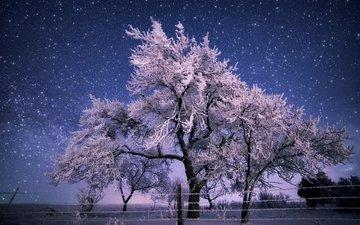 деревья, природа, зима, пейзаж, иней, забор