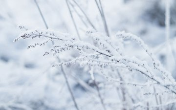 снег, зима, макро, растение
