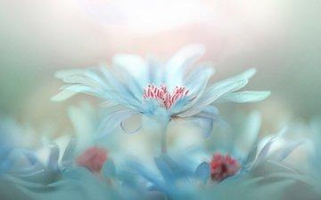 blumen, blütenblätter, bokeh