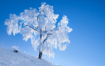 the sky, snow, nature, tree, winter, frost, romain guy