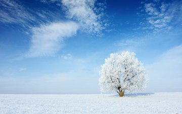 the sky, clouds, snow, nature, tree, winter, landscape, frost