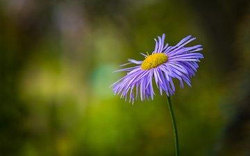 цветок, лепестки, размытость, стебель, боке