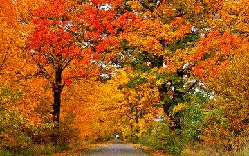 деревья, природа, листья, парк, осень, лес.парк