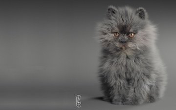 арт, животные, кошка, котенок, малыш, пушистик, 3д графика