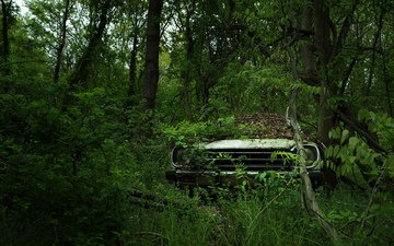 trees, nature, forest, leaves, summer, auto, machine, car, cars
