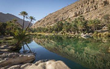 озеро, природа, пустыня, пальмы, оазис, oman