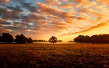 the sky, clouds, nature, tree, sunset, landscape, field