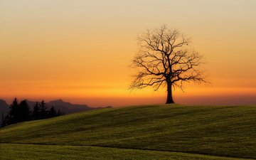 природа, дерево, закат, пейзаж, поле