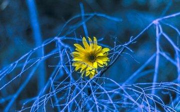 природа, фон, цветок, ветки