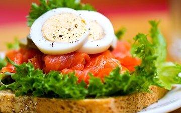 зелень, бутерброд, хлеб, яйца, рыба, яйцо, сэндвич, сёмга, красная рыба
