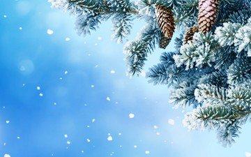 снег, хвоя, зима, макро, ель, шишки