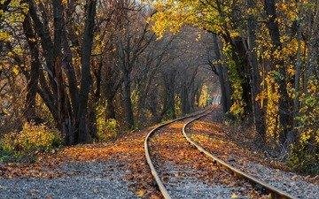 деревья, железная дорога, рельсы, природа, лес, листья, парк, осень