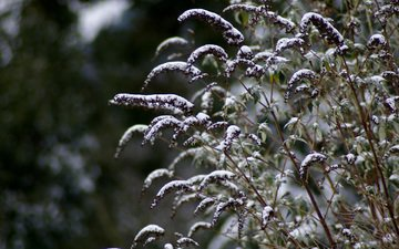 schnee, winter, makro, stängel, die pflanze