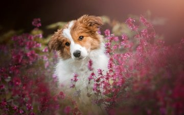 flowers, muzzle, dog, puppy