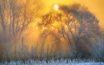 trees, nature, winter, landscape, morning, dawn, frost