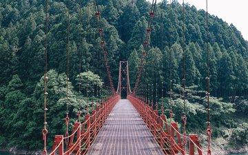 деревья, природа, лес, пейзаж, мост, подвесной мост