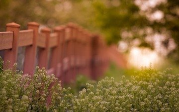 light, flowers, grass, nature, macro, summer, the fence, blur, plant
