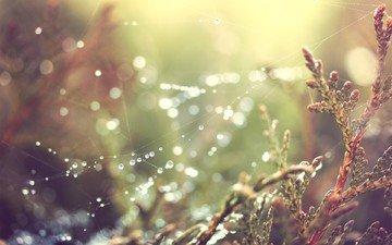 макро, капли, блики, растение, паутина