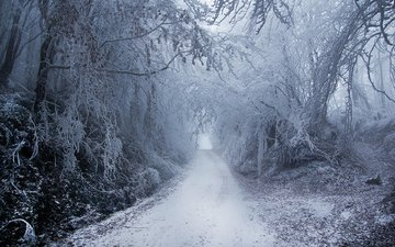 деревья, природа, лес, зима, парк, туман, ветки, иней