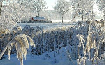 деревья, снег, природа, зима, кусты, иней, деревня, домик