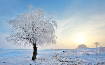 snow, nature, tree, winter, landscape, frost, jordache
