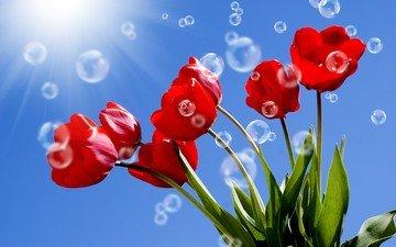 небо, цветы, солнце, листья, лучи, красные, тюльпаны, стебли, пузырьки