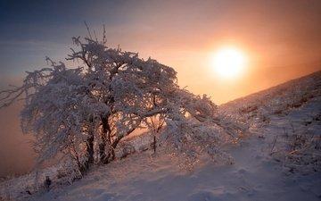 snow, nature, tree, sunset, winter, egor nikiforov
