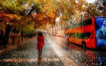 деревья, девушка, город, осень, улица, дождь, зонт, автобус