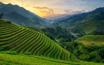 hills, nature, sunset, landscape, plantation, vietnam, chanwity, mu cang tea