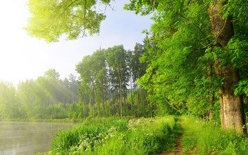 grass, trees, lake, the sun, nature, greens, forest, rays, foliage, summer, path, reed