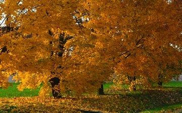 деревья, природа, парк, осень