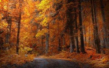 дорога, деревья, природа, лес, листья, парк, осень