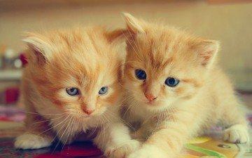 усы, взгляд, коты, кошки, котята, мордочки