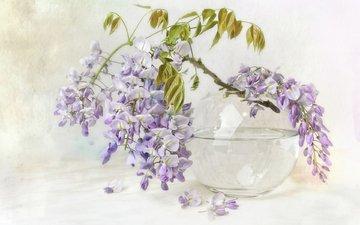 цветы, ветка, ваза, глициния, вистерия